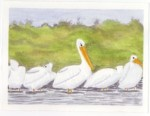 """Card -""""Pelicans"""" - Watercolor painting by NMSG"""